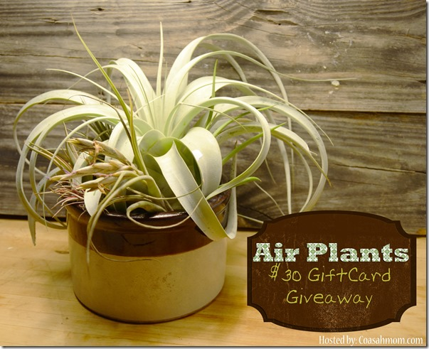 Air Plants $30 GC Giveaway