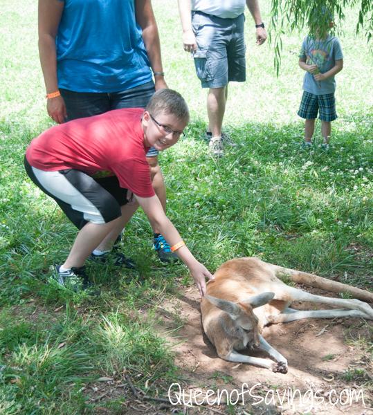 Kentucky Down Under Zoo Red Kagaroo 2