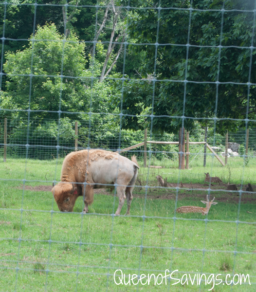Kentucky Down Under Zoo Buffalo