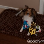 Nala with godog bed and toys
