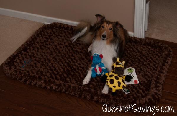 Nala with godog bed and toys