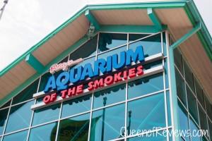 Ripley's Aquarium 16