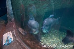 Ripley's Aquarium 1