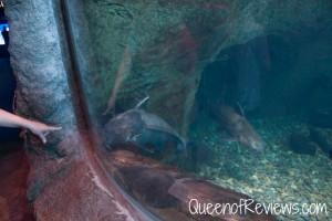 Ripley's Aquarium 49
