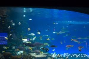 Ripley's Aquarium 47