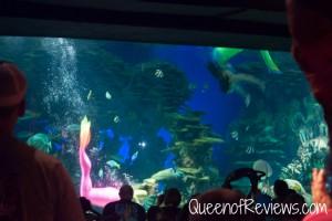 Ripley's Aquarium 46
