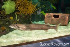 Ripley's Aquarium 45