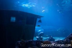 Ripley's Aquarium 44