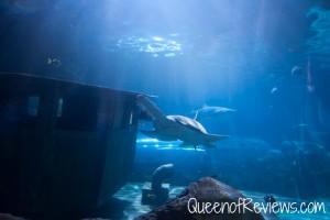 Ripley's Aquarium 43