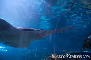 Ripley's Aquarium 42