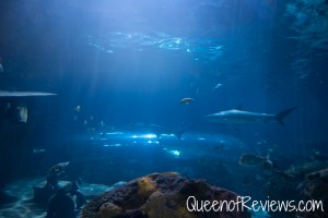 Ripley's Aquarium 41