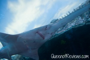 Ripley's Aquarium 40