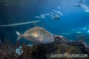 Ripley's Aquarium 39