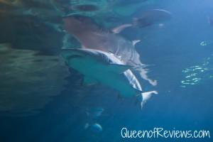 Ripley's Aquarium 38