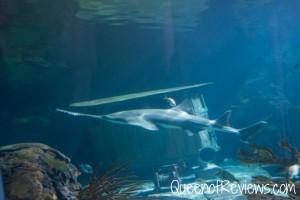 Ripley's Aquarium 37