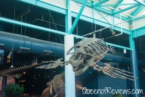 Ripley's Aquarium 14