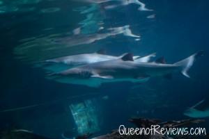 Ripley's Aquarium 36