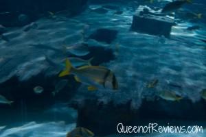 Ripley's Aquarium 35