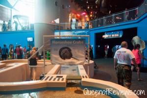 Ripley's Aquarium 33