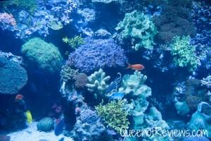 Ripley's Aquarium 32