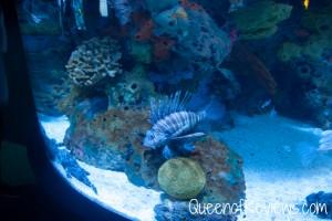 Ripley's Aquarium 31