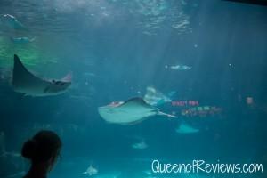 Ripley's Aquarium 29