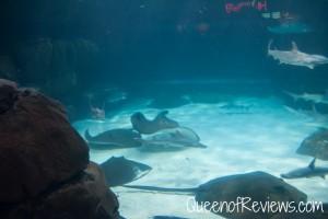 Ripley's Aquarium 28