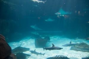 Ripley's Aquarium 27