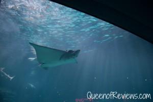 Ripley's Aquarium 26