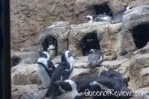 Ripley's Aquarium 25