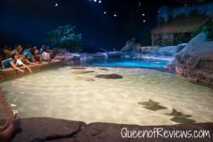 Ripley's Aquarium 23