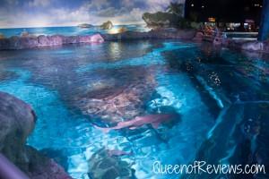 Ripley's Aquarium 22
