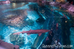 Ripley's Aquarium 21