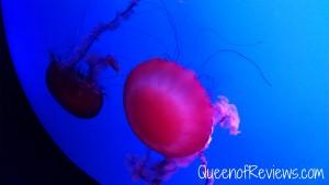 Ripley's Aquarium 17