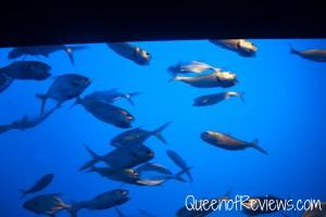 Ripley's Aquarium 11