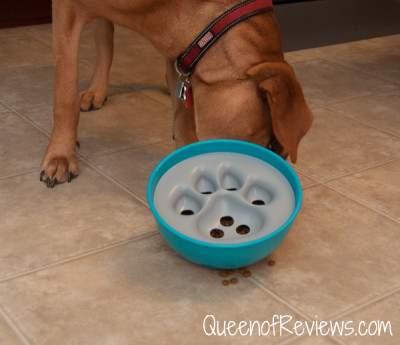 Xena and Rock N Bowl Puzzle Feeder 2