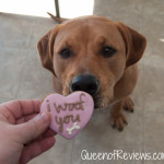 Our February 2016 Pooch Perks Box – Some Valentine's Day Love for Xena