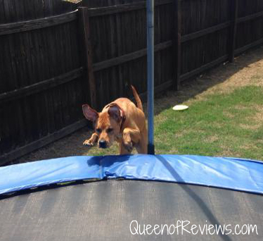 Xena Jumping on Trampoline