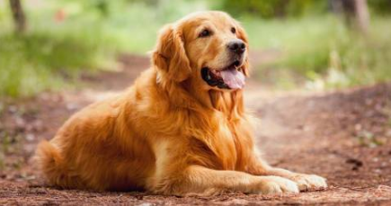 How to Extend the Life of Your Pet