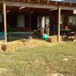 Pumpkintown at Shuckles Farms
