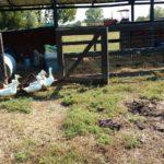 Petting Zoo at Shuckles