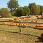 Pumpkin patch at Shuckles