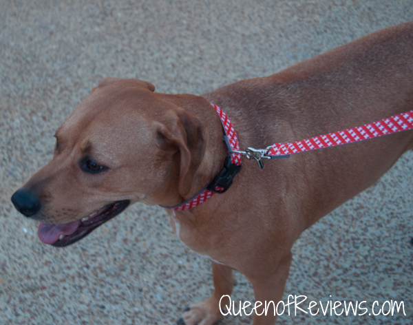 Xena waring molly mutt Great Expectations Collar and Leash 2