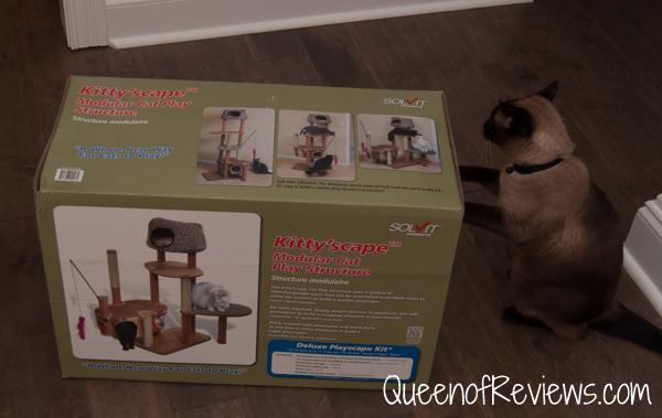 Mocha with Solvit Kitty'Scape Deluxe Kit