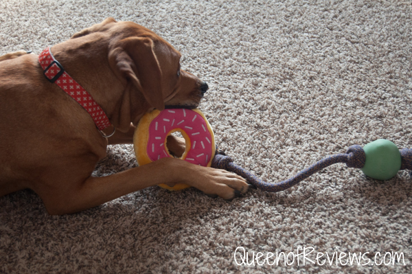 Xena and the Donut from The Dapper Dog Box