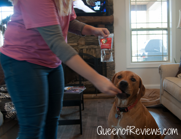 Xena eating treats from November 2016 Pooch Perks Box