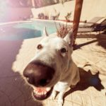 What to Do When Your Dog Gets a UTI