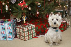 Simple Christmas Present Ideas For Your Pet